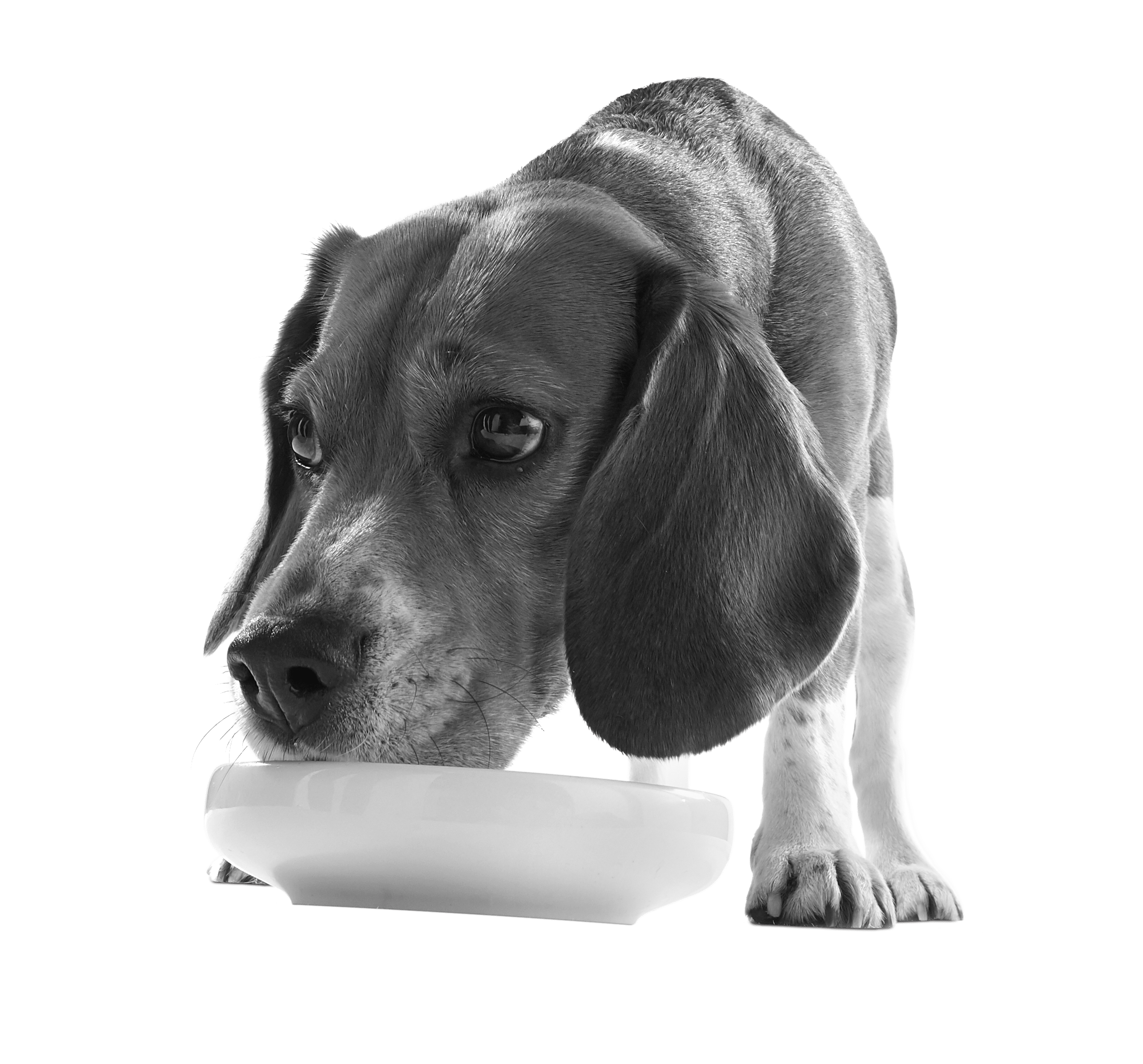 Applaws Taste Toppers Dog eating out of bowl